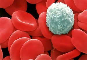 Come contrastare l'abbassamento dei globuli bianchi dovuto all'Abraxane